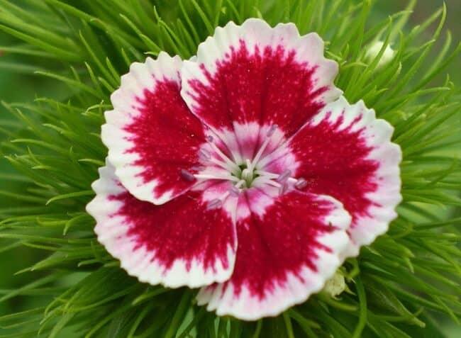 Todo sobre los significados de las flores significado de las flores - Todo tipo de plantas con sus nombres ...