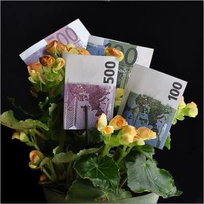maceta flor del dinero