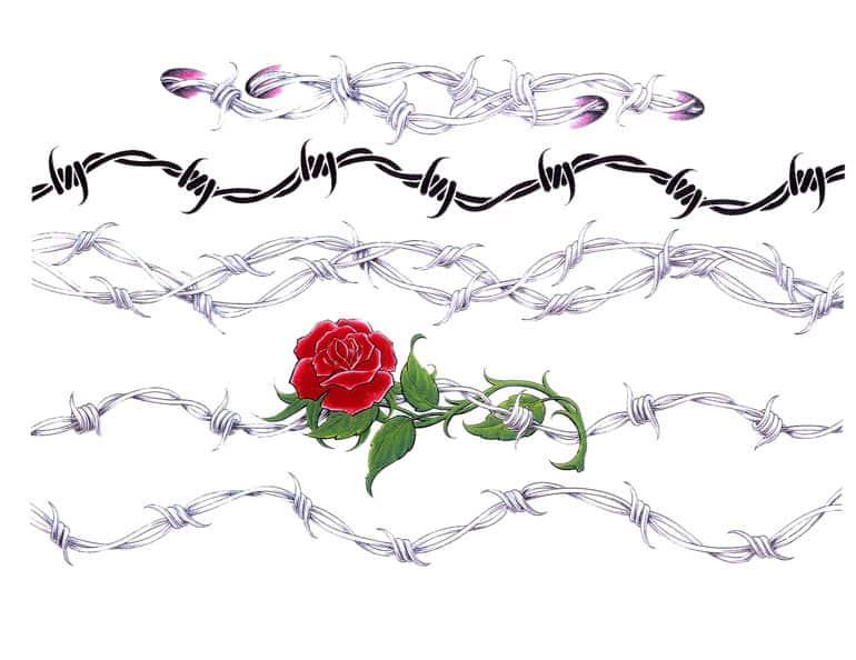 rosa-espinas