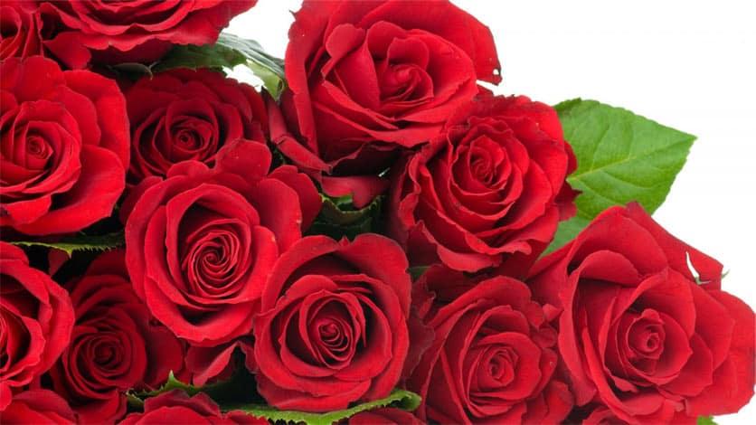 rosas-rojas-en-significado-de-las-rosas