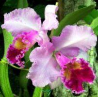 1 orquídeas