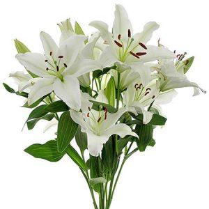 Resultado de imagen de imagenes de flores azucenas