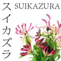 FLORES JAPONESAS 15 SUIKAZURA