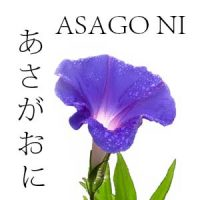 FLORES JAPONESAS 4 ASAGO NI