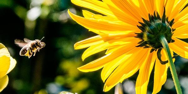 que es una flor