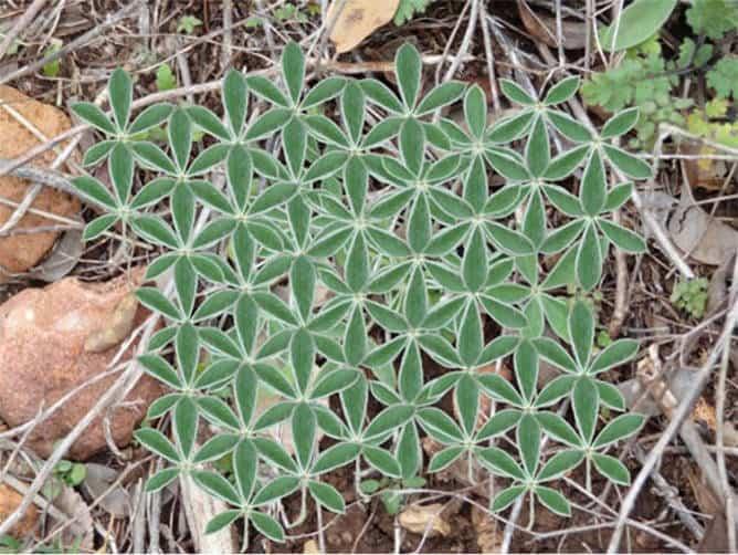 Flor de la vida en la Naturaleza